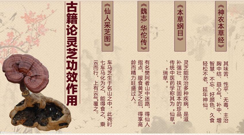 灵芝草的功效与作用_灵芝的功效与作用,总裁马明川为您详解